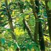 Интересное о деревьях
