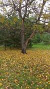 Осень Ларисы Лобановой